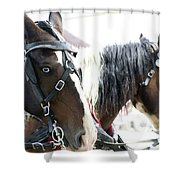 Carriage Horse - 5 Shower Curtain