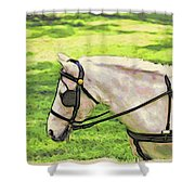 Carriage Pony Shower Curtain