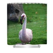 Carribean Pink Flamingo Shower Curtain