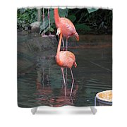 Cartoon - A Flamingo In The Small Lake In Their Exhibit In The Jurong Bird Park Shower Curtain
