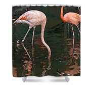 Cartoon - A Flamingo With Its Head Under Water In The Jurong Bird Park Shower Curtain