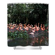 Cartoon - Flamingos In Their Exhibit Along With A Small Lake In The Jurong Bird Park Shower Curtain