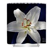 Casablanca White 0935 Shower Curtain
