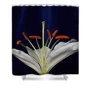 Casablanca White 9966 Shower Curtain