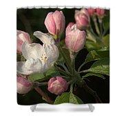 Cascade Of Apple Blossoms Shower Curtain