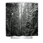 Cascade Snow Shower Curtain