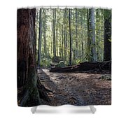 Cascades Forest Path Shower Curtain