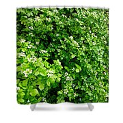 Cascading Fleabane Shower Curtain