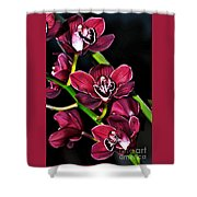 Cascading Red Orchids Shower Curtain