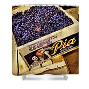 Case Of Sangiovese Grapes Shower Curtain