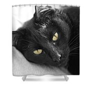 Caspian Shower Curtain