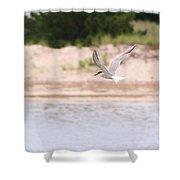 Caspian Tern Shower Curtain
