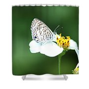 Cassius Blue On Wildflower Shower Curtain