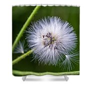 Cast Your Fate To The Wind Shower Curtain