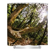 Castle Rock State Park Branch To The Sun Shower Curtain