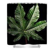 Castor Bean Leaf Shower Curtain