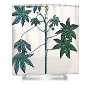 Castor Oil Plant Shower Curtain