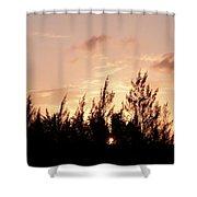 Casurina Sunset Shower Curtain