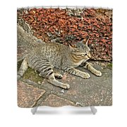 Cat At Wat Mahathat In 13th Century Sukhothai Historical Park-th Shower Curtain