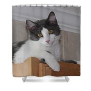 Cat Boy Shower Curtain