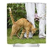 Cat Brushing Against Legs Shower Curtain