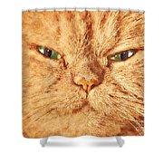 Cat Face Close Up Portrait. Painted Effect Shower Curtain