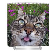 Cat Face Shower Curtain