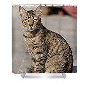 Cat In Aegina Island Shower Curtain
