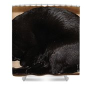 Cat In The Box Shower Curtain
