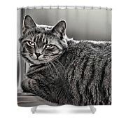 Cat In Window Shower Curtain