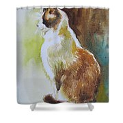 White And Brown Cat Shower Curtain