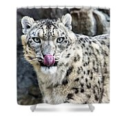 Cat Lick Shower Curtain