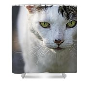 Cat Looking Shower Curtain