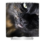 Cat Looking Up Shower Curtain