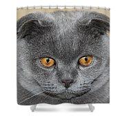 Cat Martin Shower Curtain