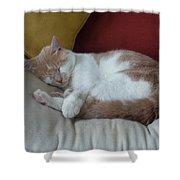Barn Cat Nap Time Shower Curtain