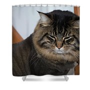 Cat Nap Time Shower Curtain
