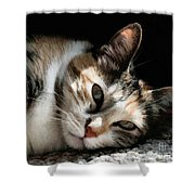 Cat Napping In The Sun By David Perry Shower Curtain