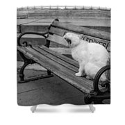 Cat On A Bench Shower Curtain