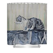 Cat On A Stone Wall Shower Curtain