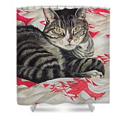 Cat On Quilt  Shower Curtain