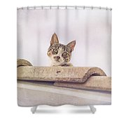 Cat On The Hot Tin Roof Shower Curtain