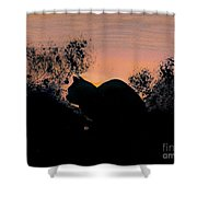Cat - Orange - Silhouette Shower Curtain