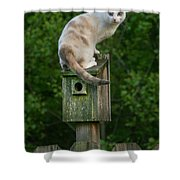 Cat Perched On A Bird House Shower Curtain