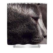 Cat Portrait Shower Curtain