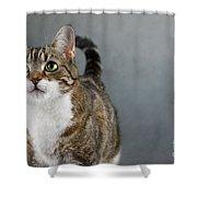 Cat Portrait Shower Curtain by Nailia Schwarz