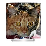 Cat Stare Down Shower Curtain