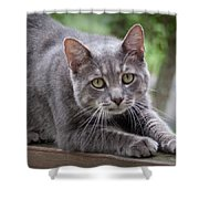 Cat Stretch Shower Curtain
