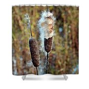 Cat Tail Seeds Shower Curtain