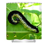 Catalapa Sphinx Caterpillar Shower Curtain